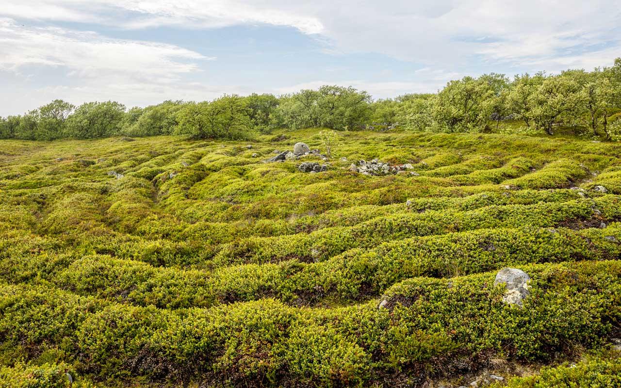stone labyrinth, magic, facts, Bolshoi Zayatsky Island, mystery