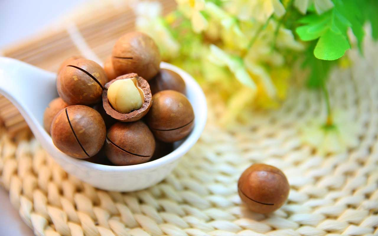 Macadamia nuts, dog, cat, pets, facts, life, people, animals