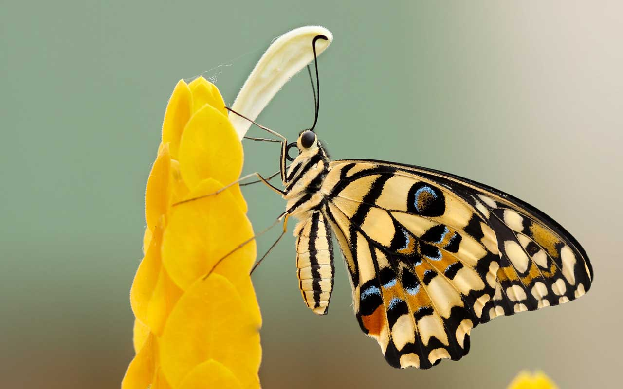 butterfly, taste, flower, plant, feet, facts, science, life, nature