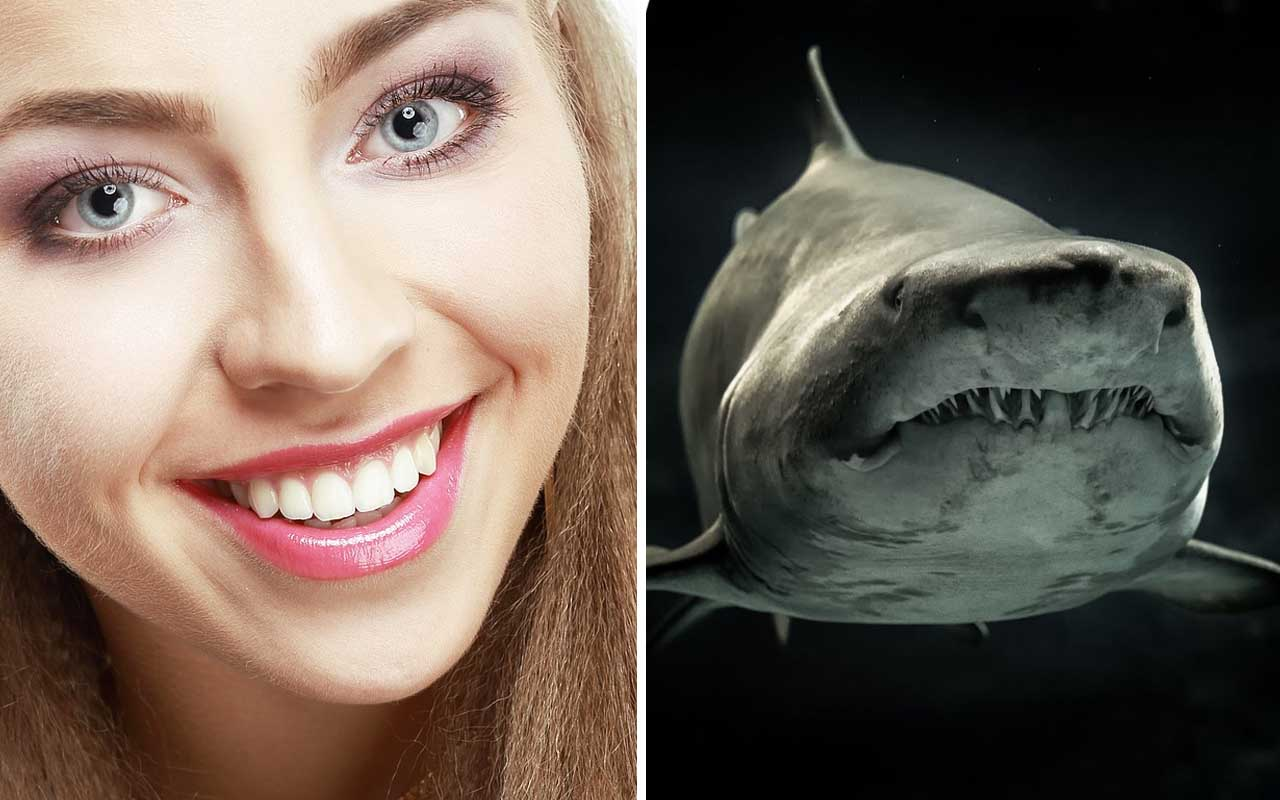 human, shark, teeth, facts, ocean, land, nature, Earth, planet, random facts, science