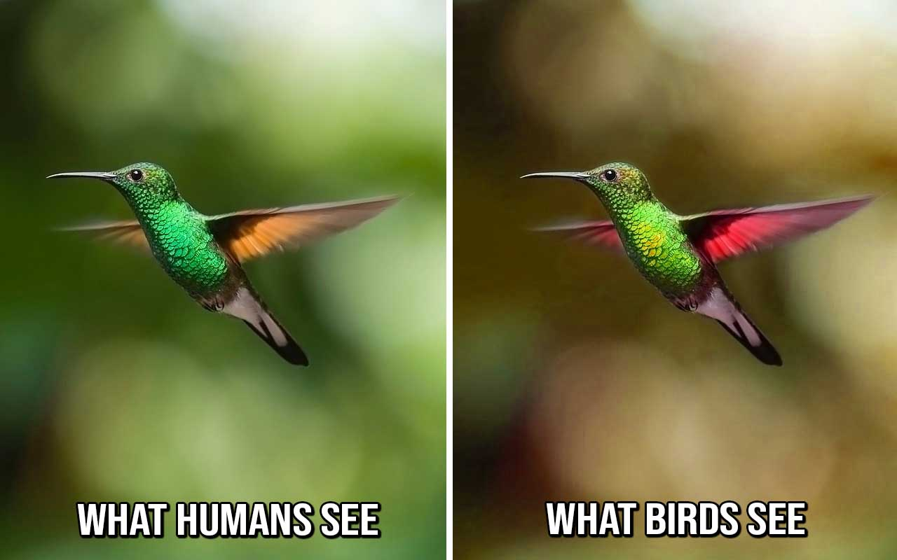 birds, humming bird, facts, science, nature, colors, Earth