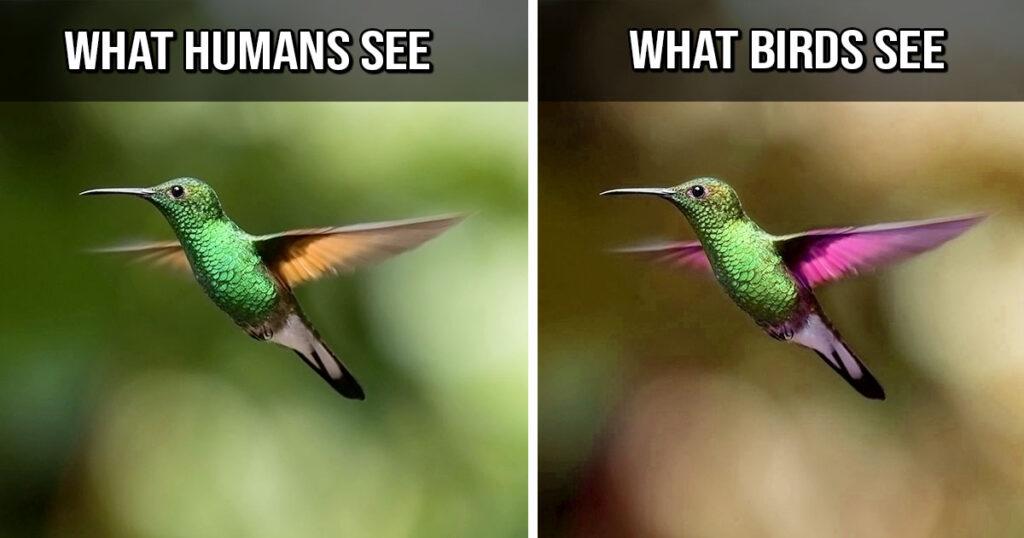 birds, animals, random facts, life, Earth