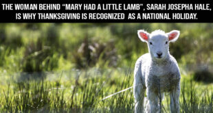 Thanksgiving, facts, life, history, people