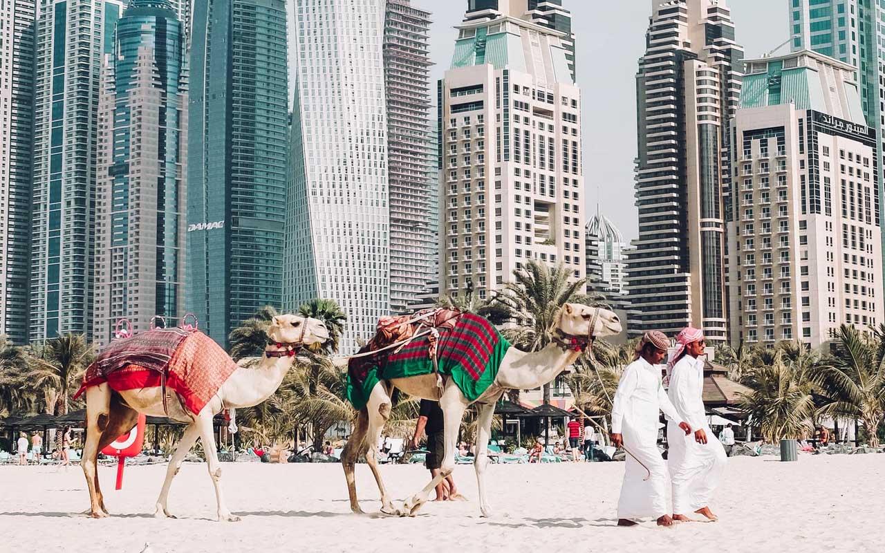 Dubai, camel, Saudi Arabia, Australia, importa, amazed