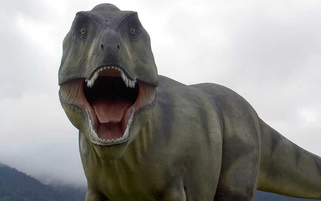 T-Rex, dinosaur, facts, history, celery, animals