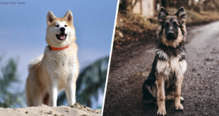 dog breeds, life, facts, animals, nature, people, loyalty