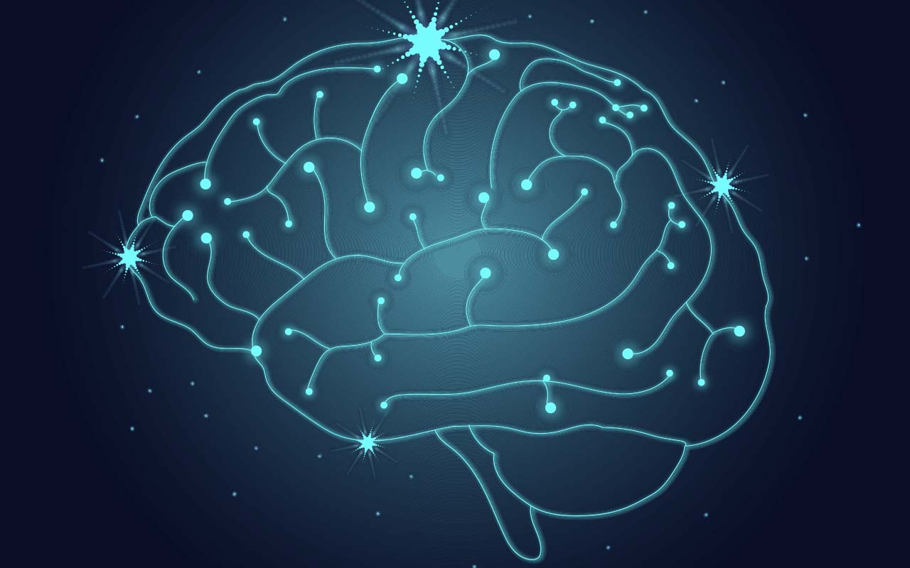 brain, structure, actors, movies, Hollywood, facts