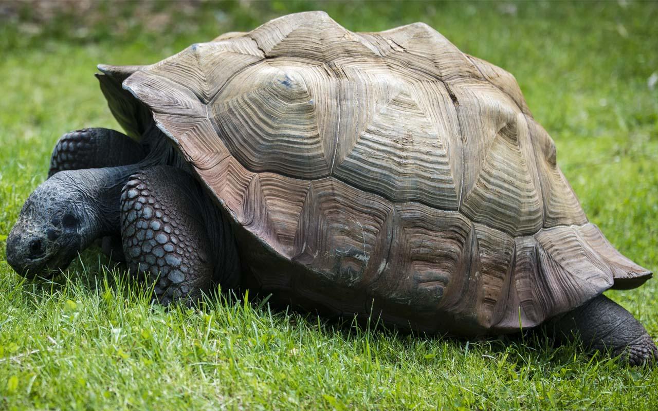 Leo, tortoise, facts, animals, ocean, nature