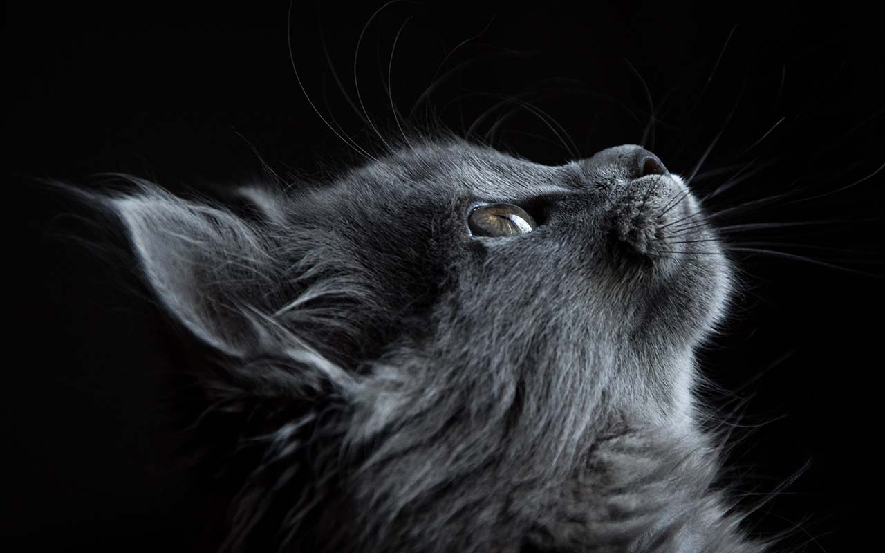 cat, cats, facts, animals, feline, life, love, nature