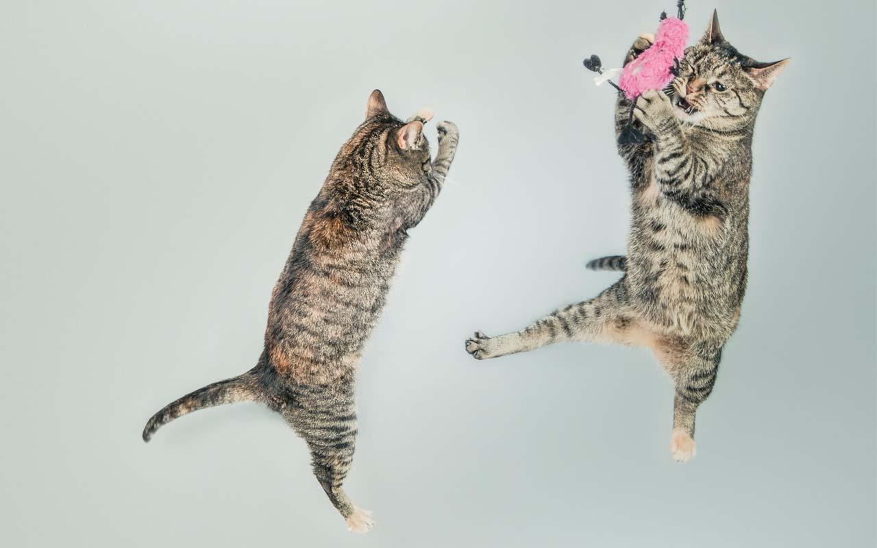 jump, reflex, aerial, life, animals