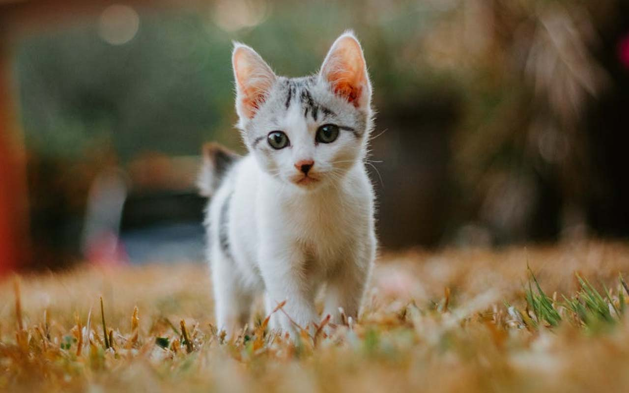 cat, listen, fun, science, studies, facts