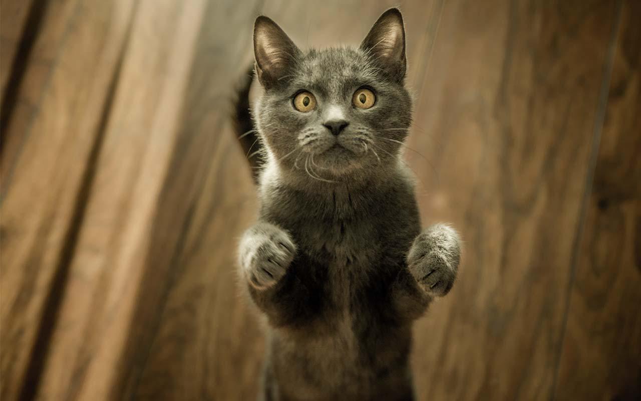 cat, cats, life, nature, animals, feline, furry friends