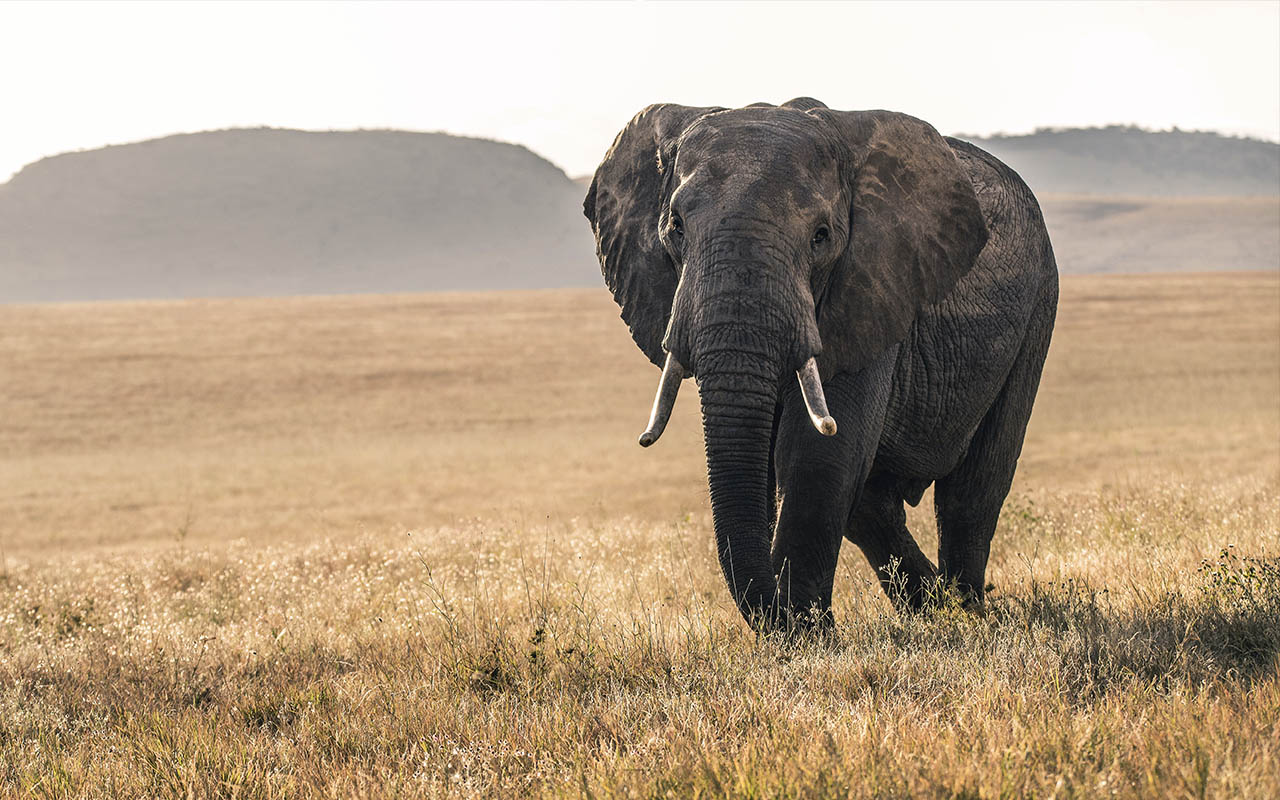 elephants, mirror, life, animals, facial recognition