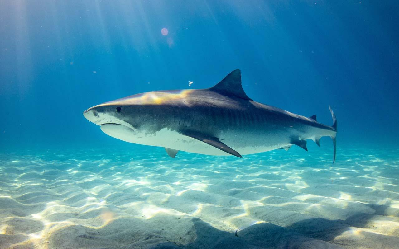 sharks, trees, prehistoric, life, animals, oceans