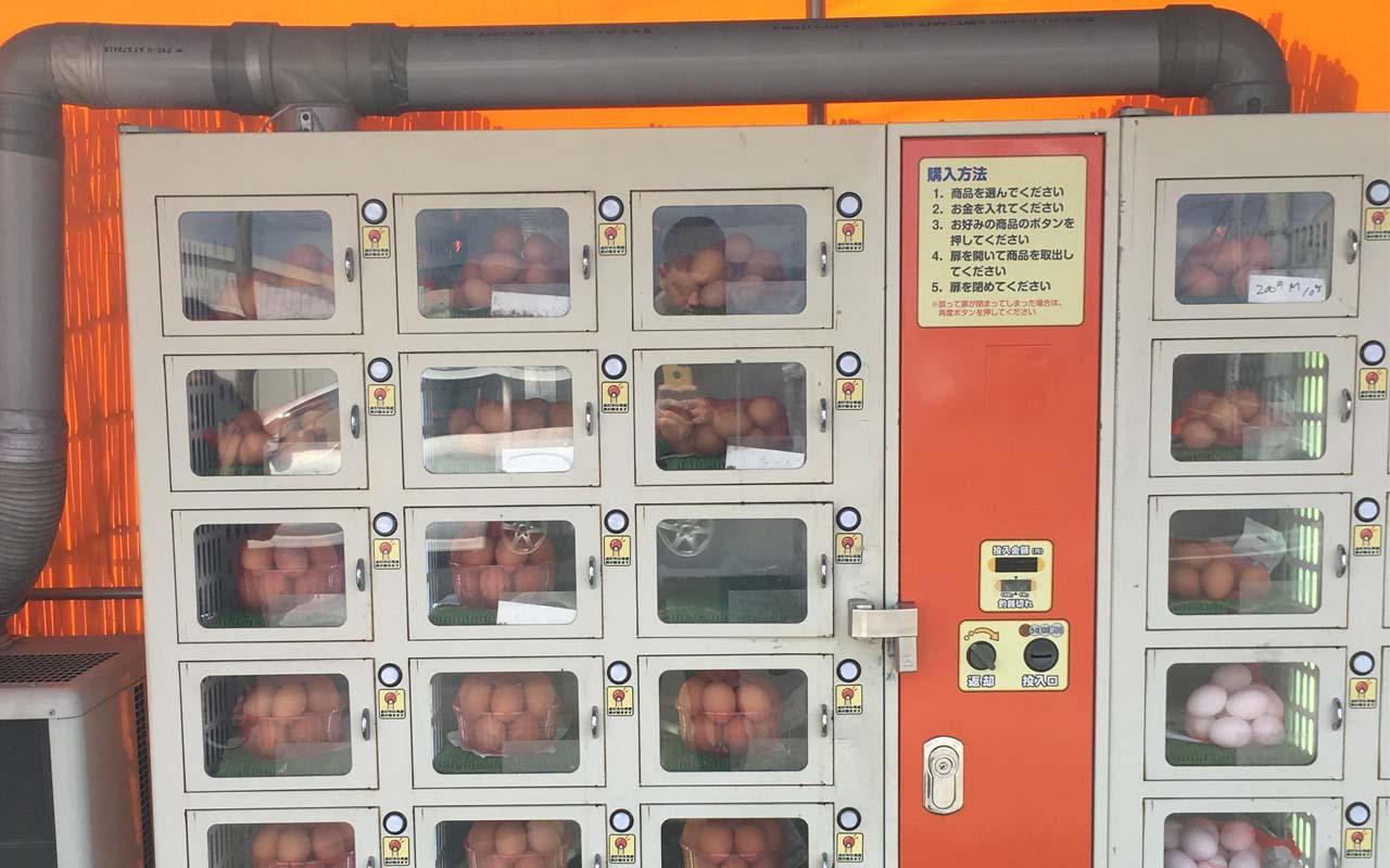 farm fresh eggs, facts, chicken, refrigerator, vending machine