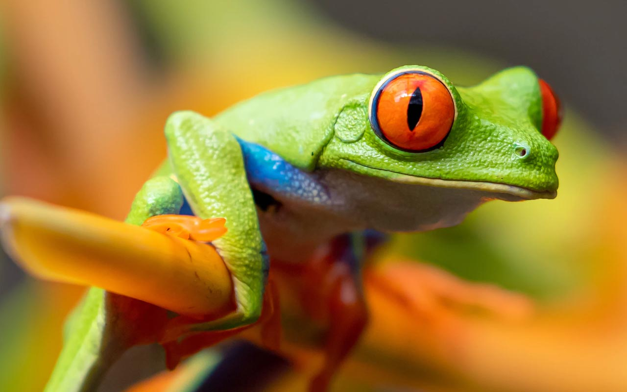 frog, hypnotize, facts, animals, nature, sciecen
