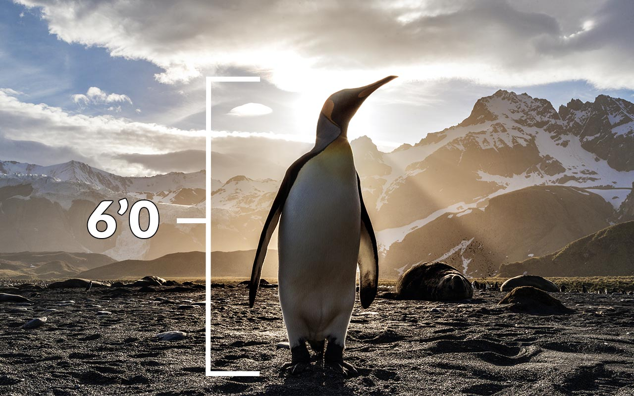 penguins, double, check, facts, animals, nature, history, history of Earth, planet Earth, blue marble