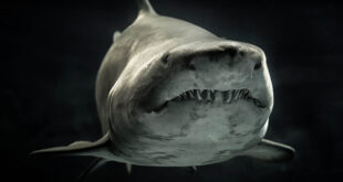 Earthly, facts, animals, ocean, sharks