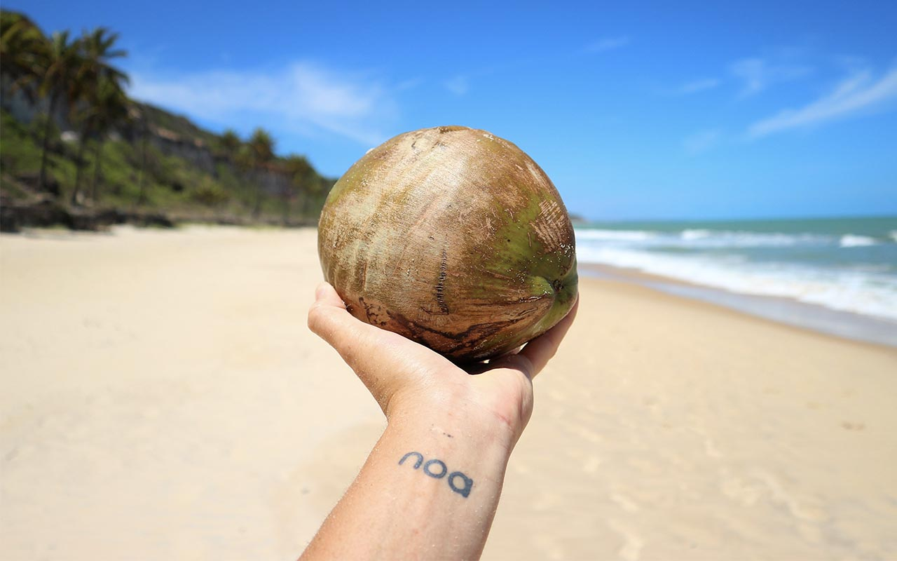 coconut, water, dehydration, wild, survival, facts, nature, ocean, coconut tree