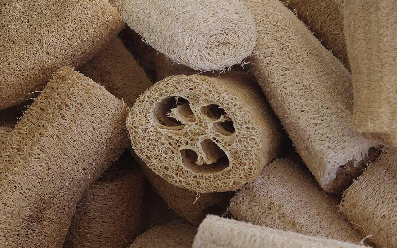Loofah, sponge, absorbant, germiest, facts, science, life, people