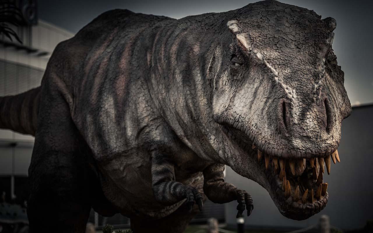 Tyrannosaurus rex, t-rex, dinosaurs, facts, life, history, animals