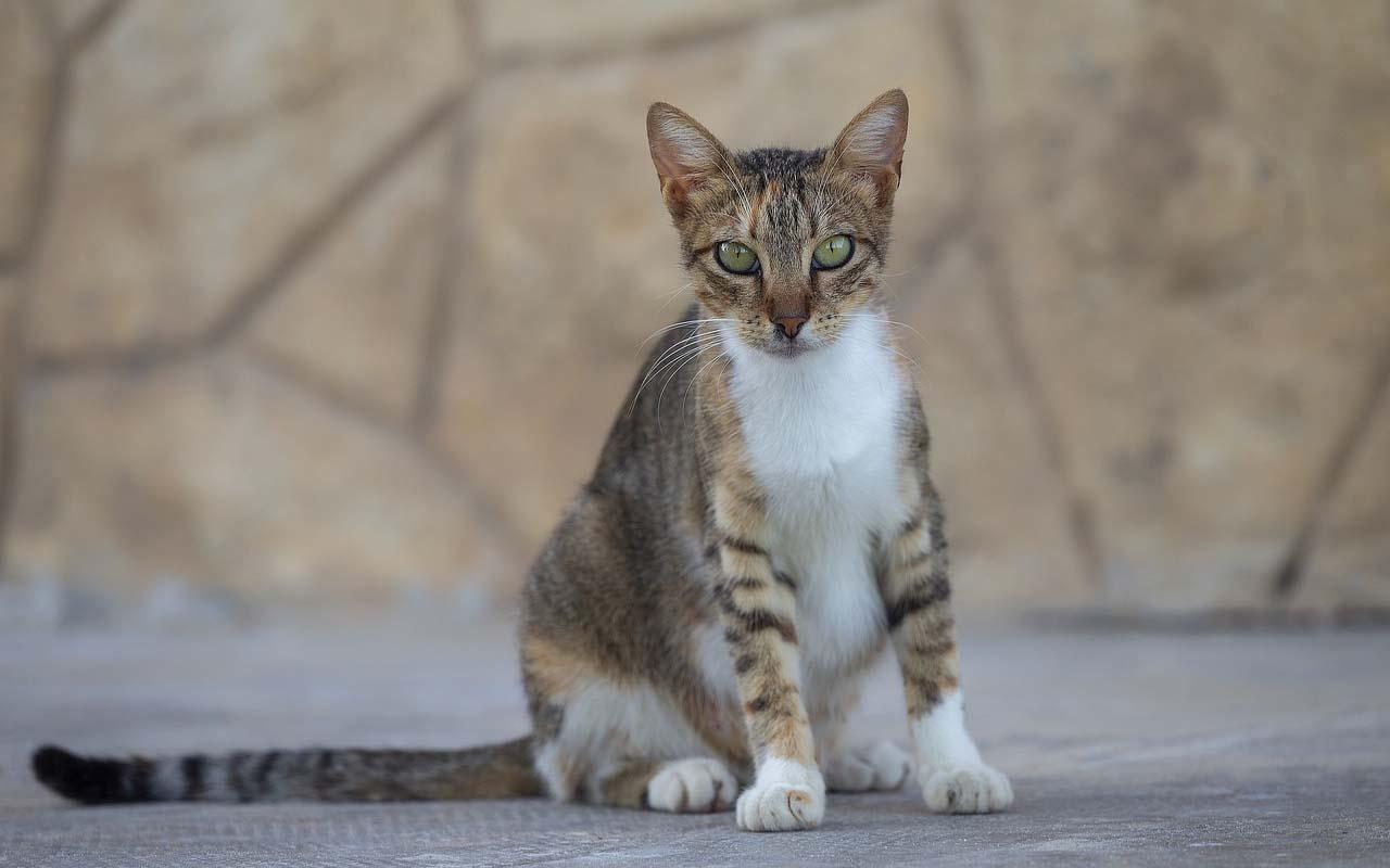 cat tail, weight, science, animals, weird