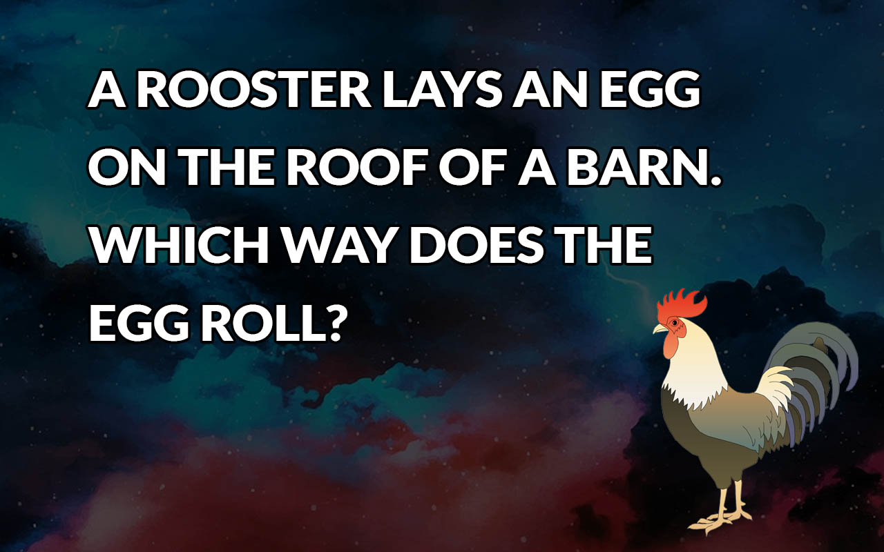 rooster, eggs, facts, life, barn, animals,