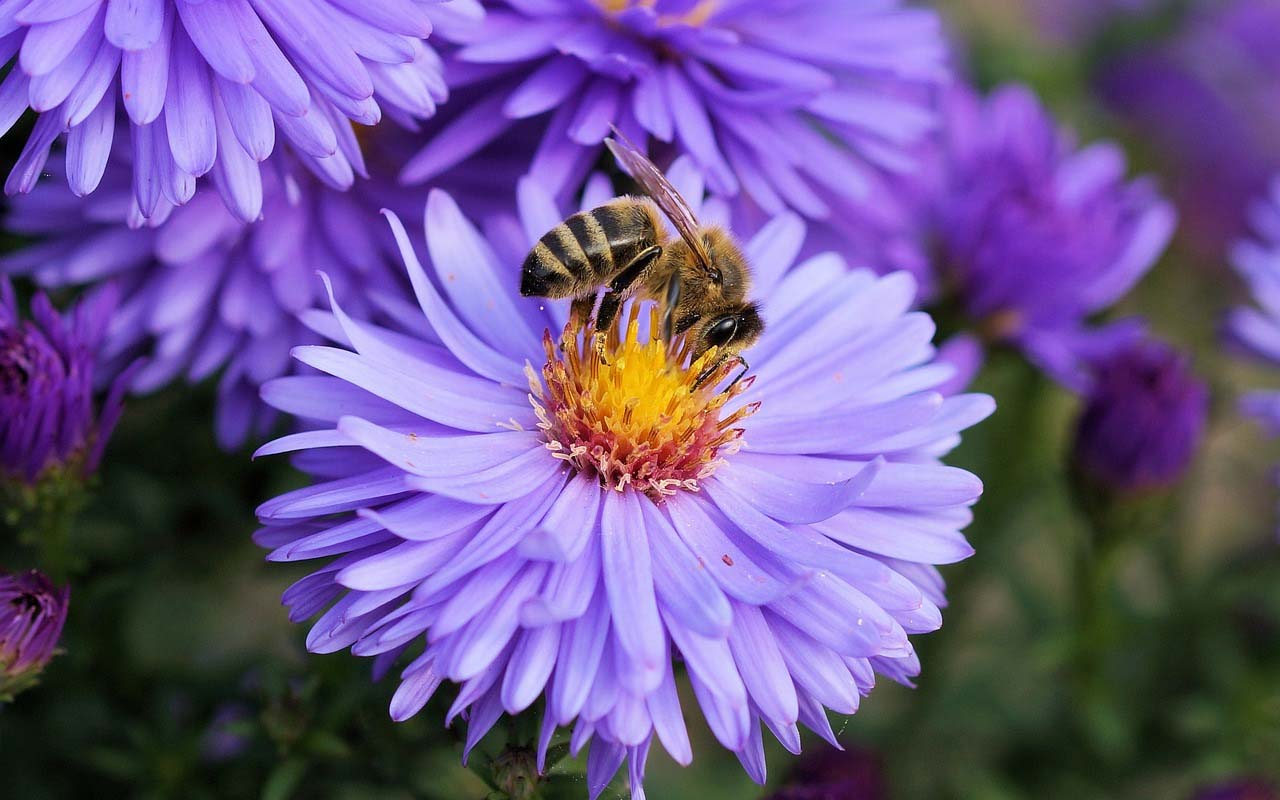 bees, facts, entertainment, science, animals, insects, life