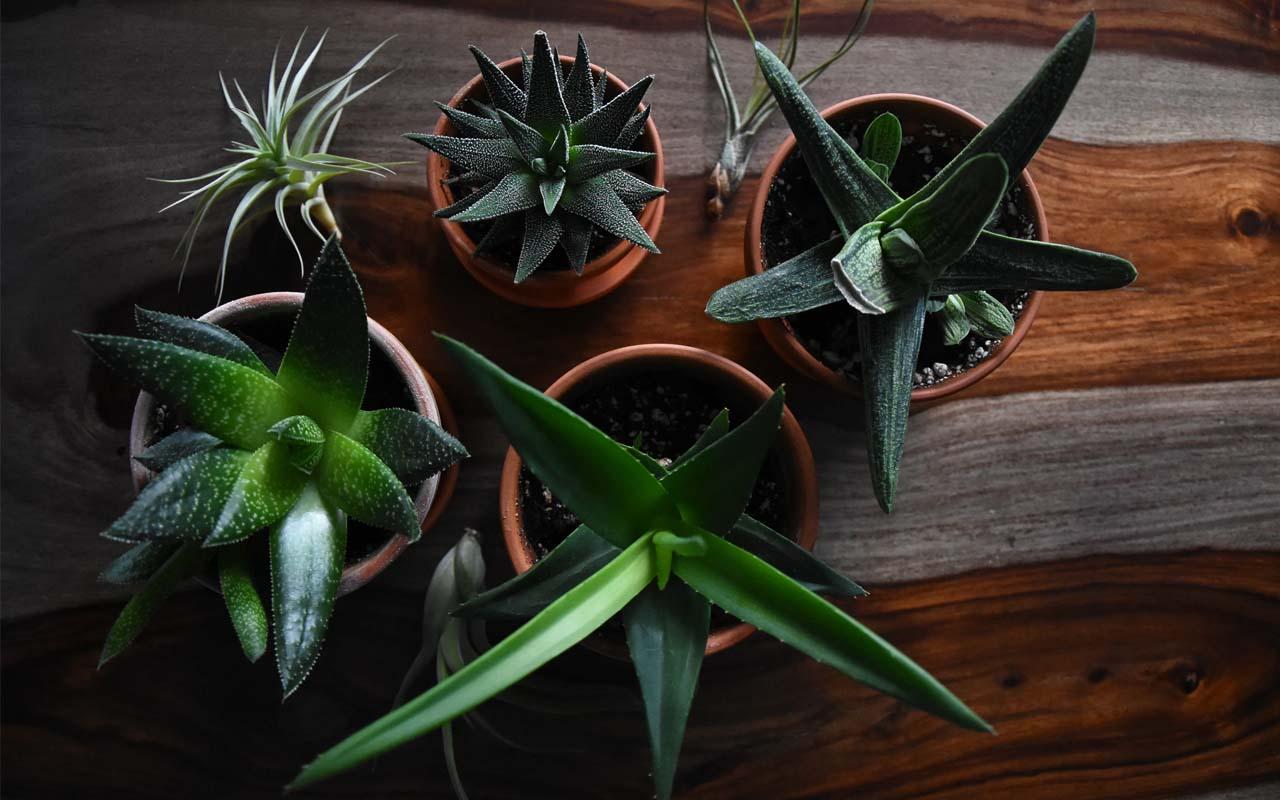 houseplant, nitrogen, aeration, plants, nature, home