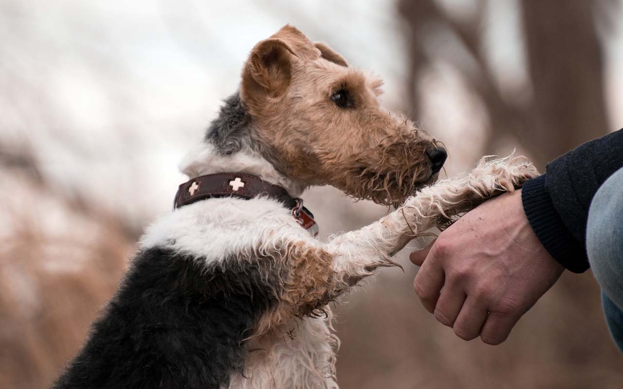 paw, dogs, animals, humans, survival, wild, wolf, fear, love, care, adoption,