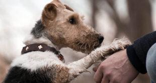 paw, humans, love, dog, animals, happiness
