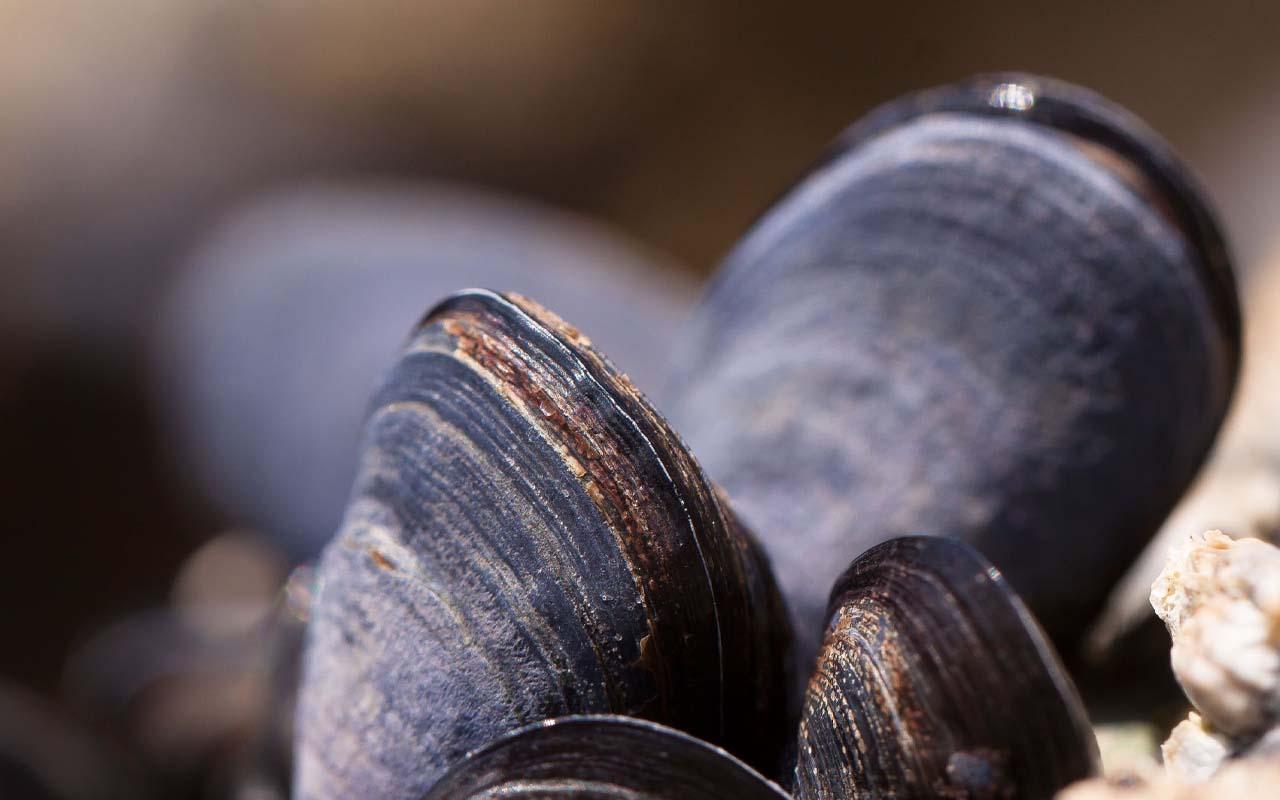 clams, legs, facts, life, ocean, mammals, interesting