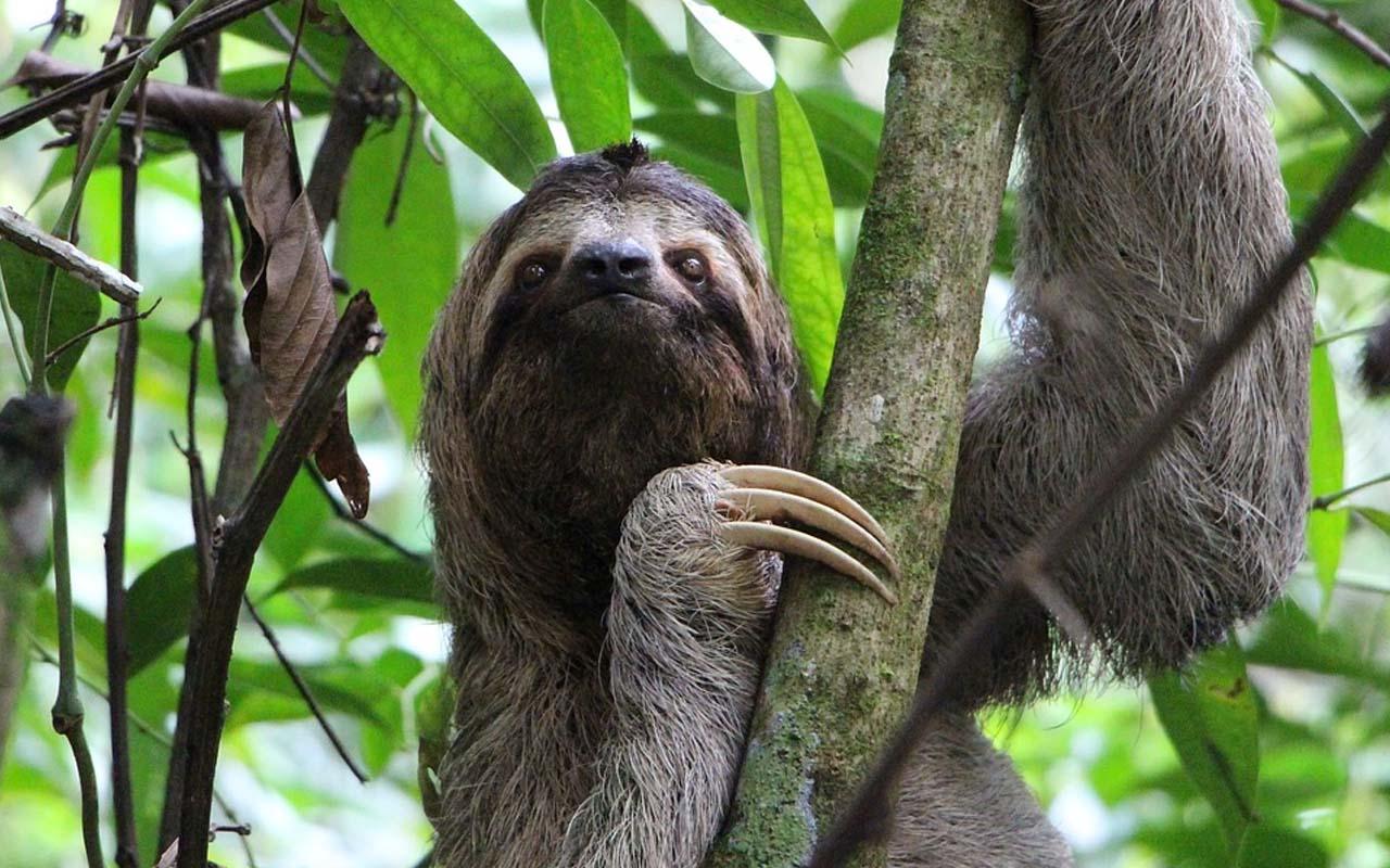 sloth, animal, wildlife, breath, dolphins, weird facts,