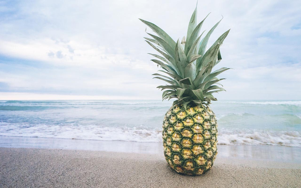 pineapple, plant, fruits, growth, life, farming, foods, glance
